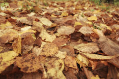 Yellow leaves background golden texture Stock Photos