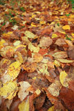 Yellow leaves background golden texture Royalty Free Stock Images