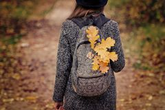 Yellow leaves in a backpack, a girl stands in an autumn forest. Back view Royalty Free Stock Photo