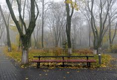 Yellow leaves on a bench in the park. Stock Photography
