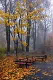 Yellow leaves on a bench in the park. Royalty Free Stock Photography