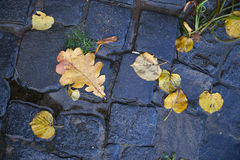 Yellow leaves on the black stones in water. Stock Photography