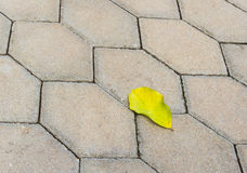 Yellow leaves on the cement floor Stock Photos