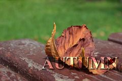 Yellow leaves of chestnut on a bench with lumpy paint with a small depth of field. Inscription autumn Royalty Free Stock Photos