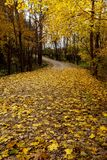 Yellow leaves covering a dirt road royalty free stock photography