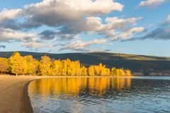 Trees with yellow autumn leaves glow in light of setting sun along lakeshore with mountains in background Royalty Free Stock Photography