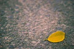 Yellow leaves fall on the concrete walkway. Copy space on cement background stock photo