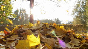 Yellow leaves fall to the ground in the autumn. Carpet of yellow leaves on the ground longer, which in slow motion leaves fall from the trees. Slow motion stock video