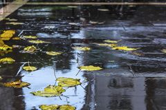 Yellow leaves fall on a wet rainy road, outdoor, close up royalty free stock photography