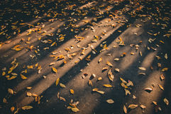 Yellow leaves fallen on ground in Autumn Stock Photo