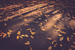 Yellow leaves fallen on ground in Autumn Royalty Free Stock Images