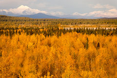 Yellow Leaves Fill Tanana River Valley Below Mountains Denali Al Royalty Free Stock Photography