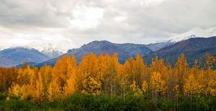 Yellow Leaves Fill Tanana River Valley Below Mountains Denali Al Royalty Free Stock Photos