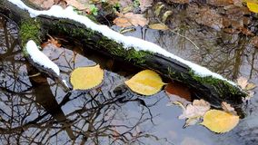 Yellow leaves float in the water, puddle in the autumn forest, winter first snowfall. 1 stock video