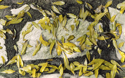 Yellow leaves. On floor in winter time Stock Photography