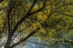 Yellow leaves on focus, beautiful clean river flowing stock photos