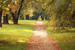 Yellow leaves on  footpath Royalty Free Stock Photo
