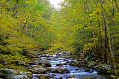 Yellow leaves frame a small mountain stream. Stock Photo