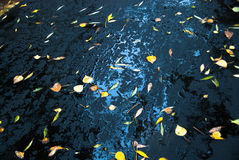 Yellow leaves on fresh asphalt and puddles Stock Images