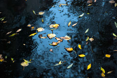 Yellow leaves on fresh asphalt and puddles Stock Image