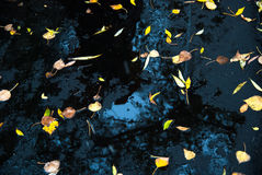 Yellow leaves on fresh asphalt and puddles Royalty Free Stock Photos