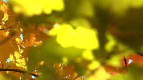 Yellow leaves. Gentle breeze blows through yellow leaves stock video