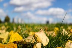 Yellow leaves on green grass with blue sky. Above Stock Photography