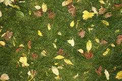 Yellow leaves and green grass Stock Images