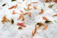 Yellow leaves on the ground in the snow. Winter and autumn meet. Royalty Free Stock Images