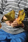 Yellow leaves in the Hand. Boy with Yellow leaf  in the Hand Royalty Free Stock Photo