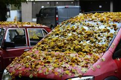 Yellow leaves on the hood and windshield of the car Royalty Free Stock Photos