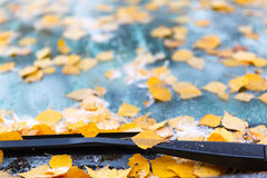 Yellow leaves and ice on the windshield Stock Photography