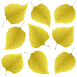 Yellow leaves of lilac Royalty Free Stock Photos