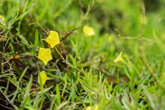 Yellow leaves in the middle of green vegetation. Nature royalty free stock photo
