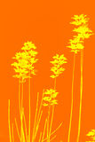 Yellow leaves. On orange background Royalty Free Illustration