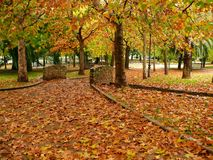 Yellow leaves in a park. Falling yellow leaves in a park in autumn stock photo