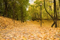 Yellow leaves on path in park Royalty Free Stock Photography