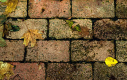 Yellow leaves on the pavement Stock Photos