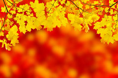 Yellow leaves are on red background vector illustration