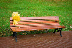 Yellow leaves on a red bench. In the forest Royalty Free Stock Photos