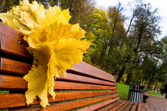 Yellow leaves on a red bench. In the forest Stock Photography