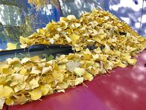 Yellow leaves on the red car. Autumn yellow leaves fellow on a red Royalty Free Stock Images