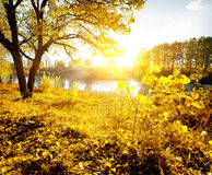 Yellow leaves and river Stock Photos