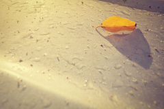Yellow leaves on the roof of a car with group of dew and carpel (vintage style) Royalty Free Stock Images