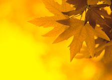 Yellow leaves, shallow focus Stock Images
