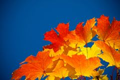 Yellow leaves on sky background Stock Photo