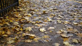 Yellow leaves sticking or blowing across a suburban sidewalk in autumn stock video
