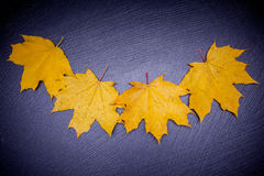 Yellow leaves on stone background Royalty Free Stock Image