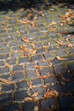 Yellow leaves on the stone pavement. Autumn background. Stock Image