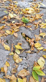 Yellow leaves on the street. Autumn yellow leaves fallen on the street Stock Photo